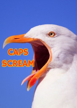 """sea gull with mouth wide open. The words """"CAPS SCREAM"""" superimposed at it's mouth"""