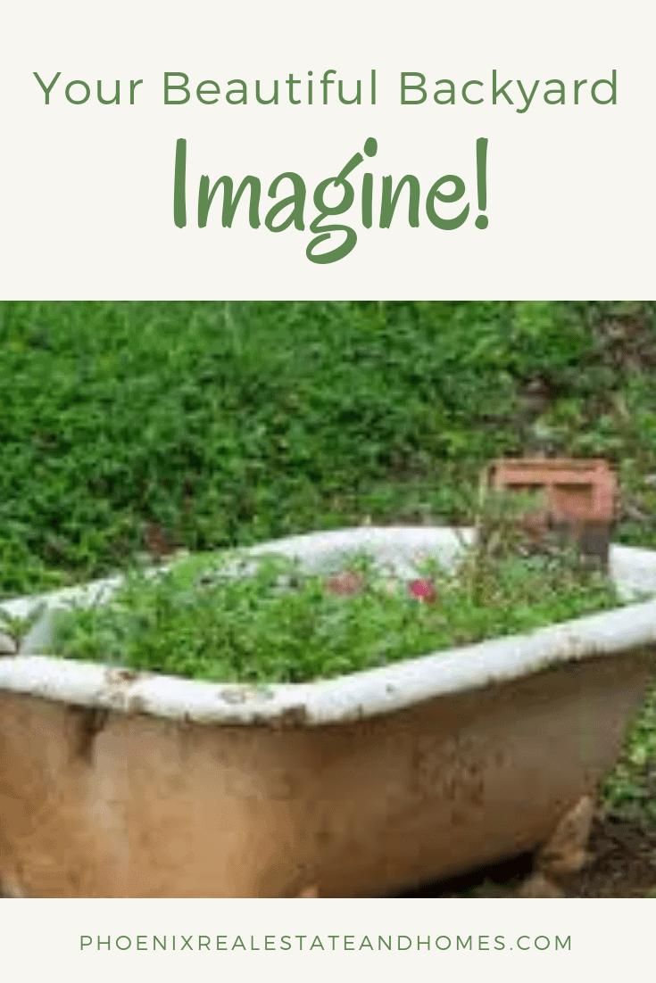 Your Beautiful Backyard